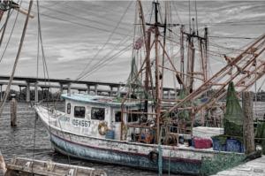 Langostino Argentino barco Tangonero