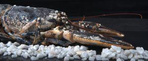 mariscos-y-pescados-todo-el-ano