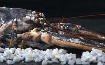 Mariscos y pescados todo el año